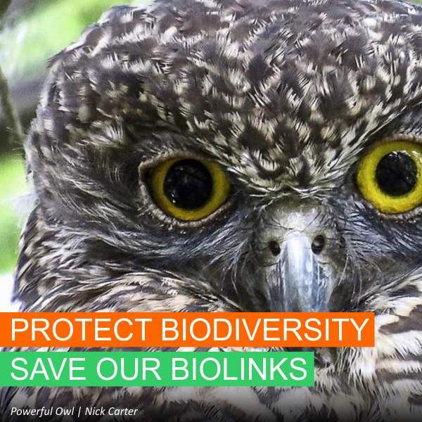Save Our Biolinks - Powerful Owl