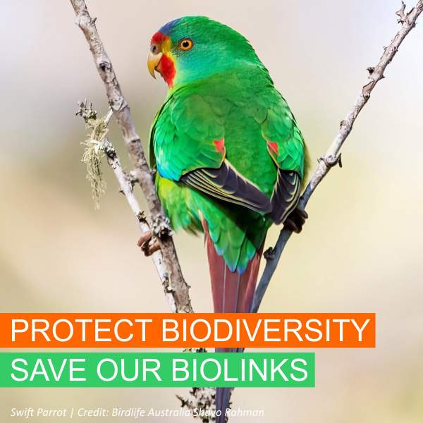 Save Our Biolinks - Swift Parrot